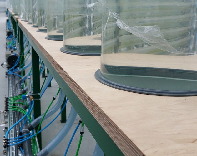 Bioreaktory do wytwarzania energii z alg