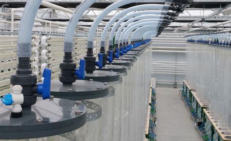 Stworzenie bioreaktorów do wytwarzania energii z alg